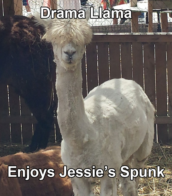drama-llama-jessie