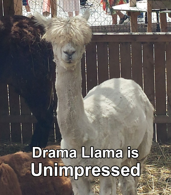 dramallama-unimpressed